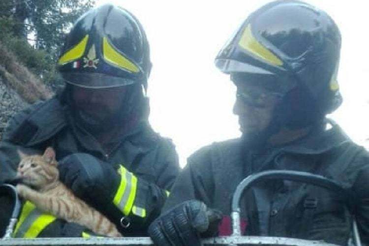 gatto salvato pompiere