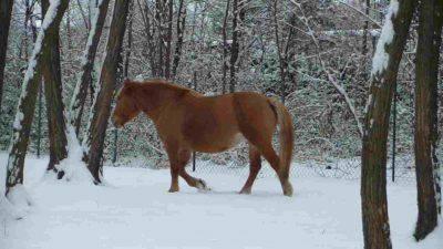 proteggere cavallo freddo