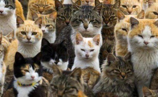 microchip gatti