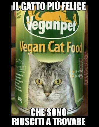 dieta vegana gatti