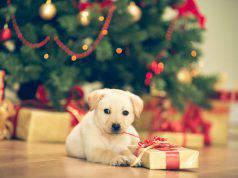 regalo natale cane