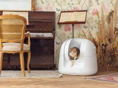 lettiere gatti