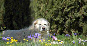 fedeltà cane