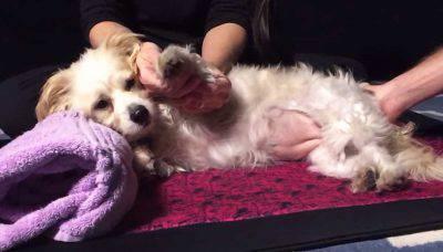 Massagiatore per cani