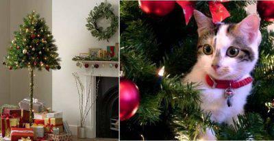 Natale 2018 Lalbero A Prova Di Gatto Prevenire I Disastri