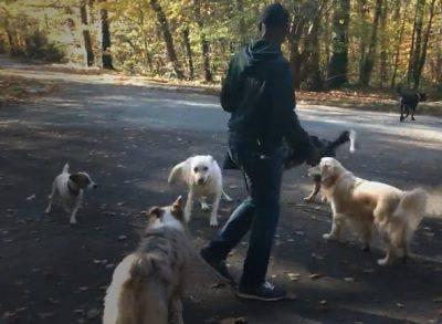 pensione per cani dog sitter