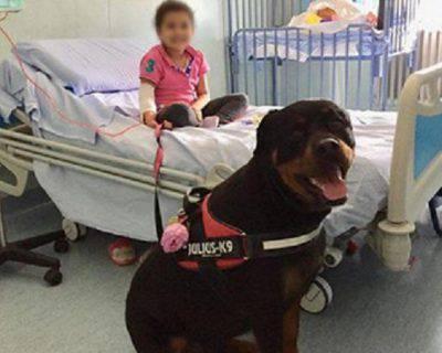 animali ospedale