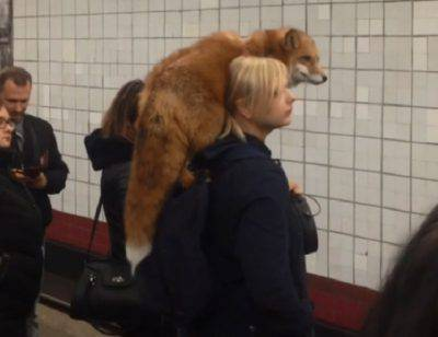 animali selvatici città
