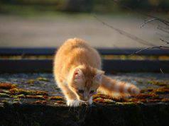gatto smarrito milano