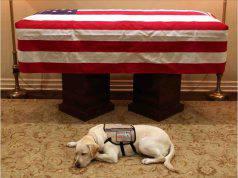 Il cane di Bush veglia la sua tomba dopo la morte