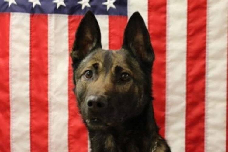 afghanistan cane soldato