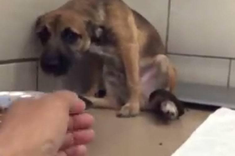 cucciolo vittima