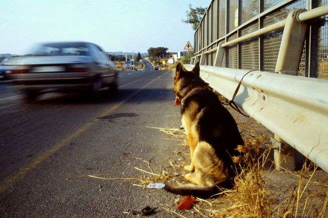 abbandono cane
