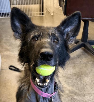 cani dimostrazione affetto