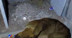 soccorso cani
