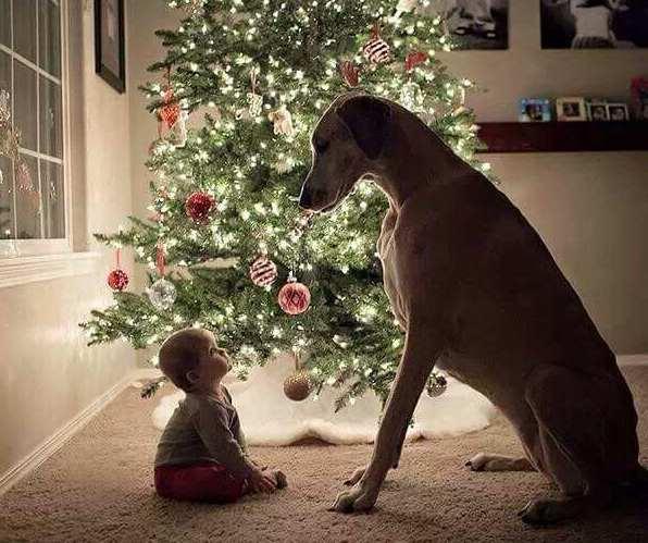 regalo cucciolo natale