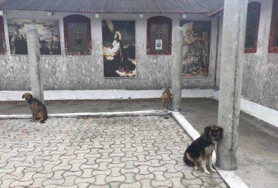 cani chiesa