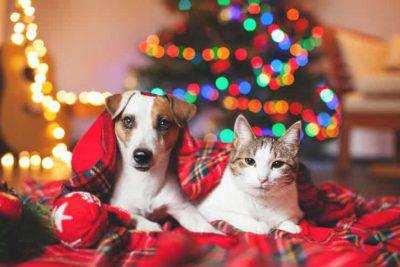botti di capodanno cani gatti