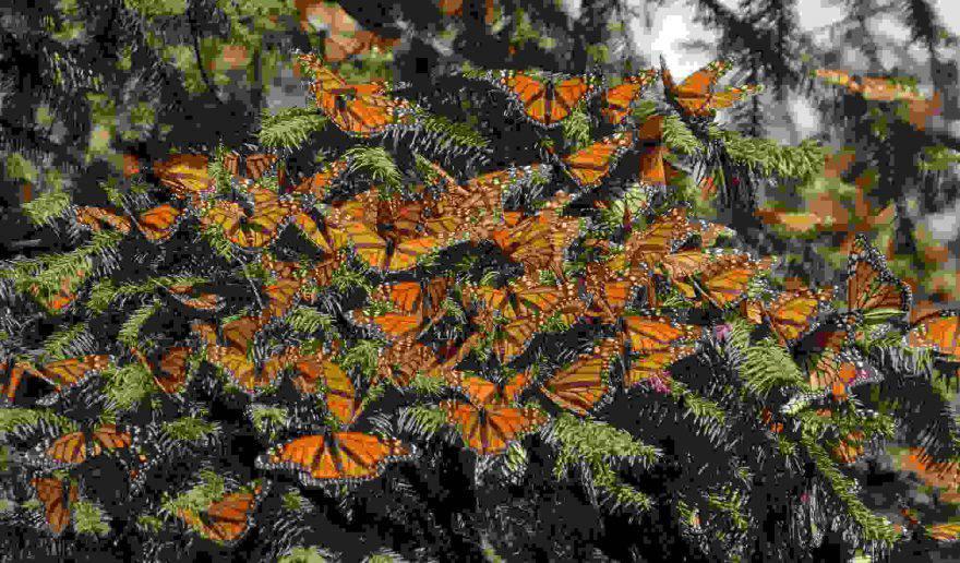 santuario farfalle