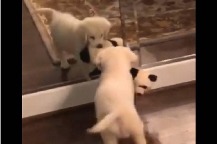 cucciolo specchio