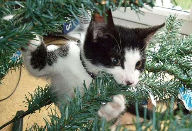 natale gatti