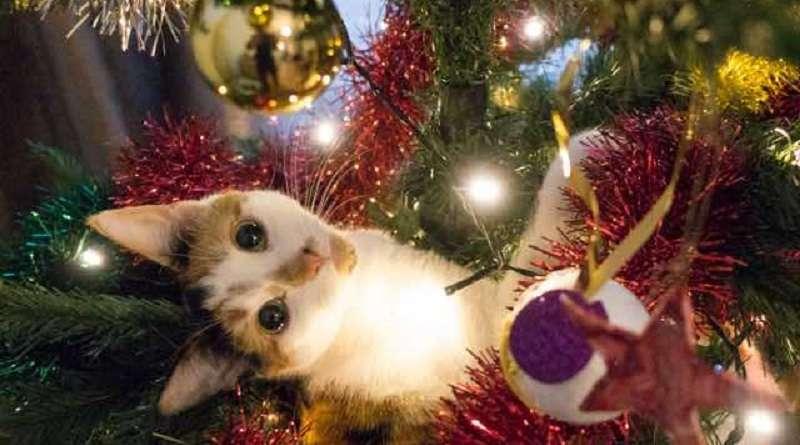 gatti albero natale