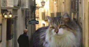 dimensione gatti giganti