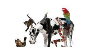 Scelta dell'animale domestico e personalità
