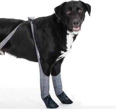 abbigliamento cane inverno