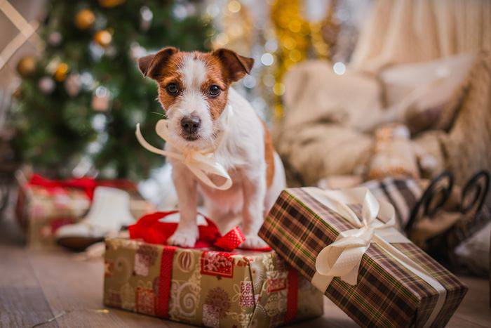regalo amanti animali