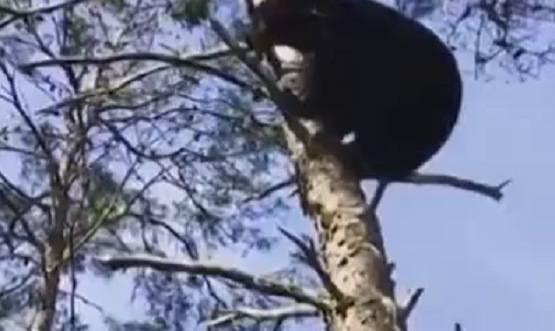 crudeltà caccia