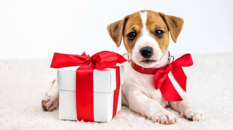Immagini Cani Natale.Regali Di Natale Per Cani 10 Idee Sfiziose Da Non Perdere