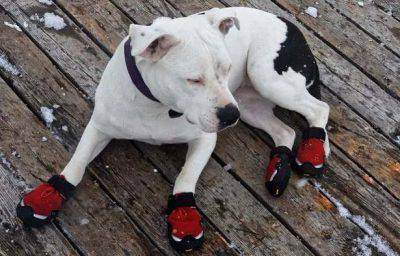 scarpe cani freddo