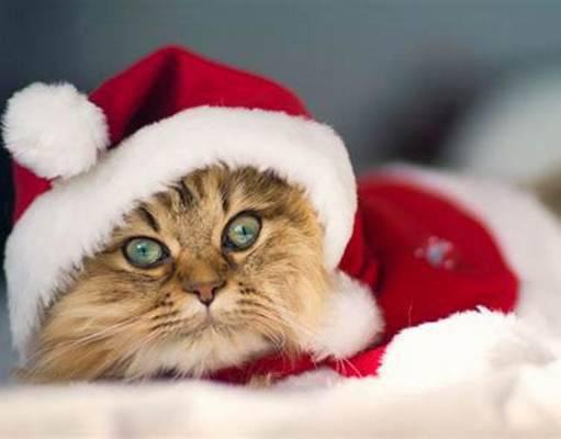 Idee regali di Natale per gatti