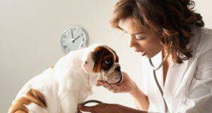 spese veterinarie gratis