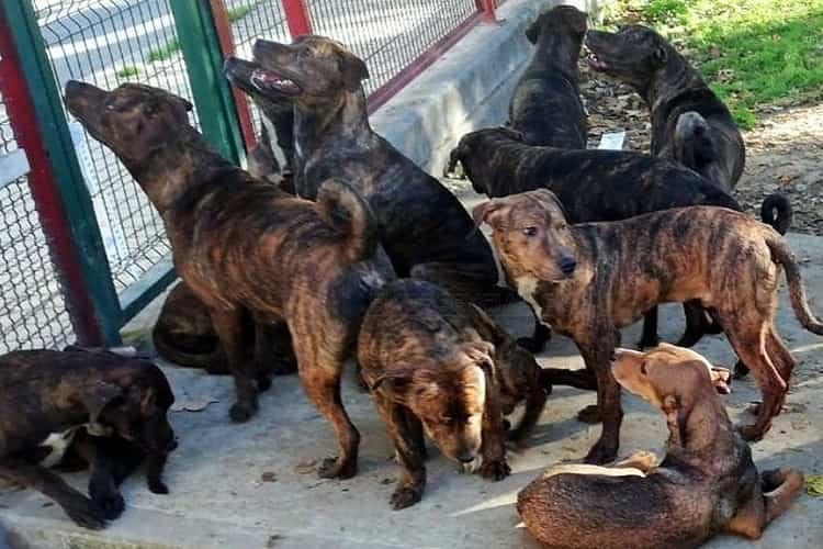 18 cani abbandonati