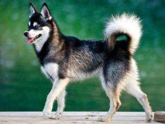 razze cani recenti