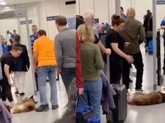 cane controlli aeroporto