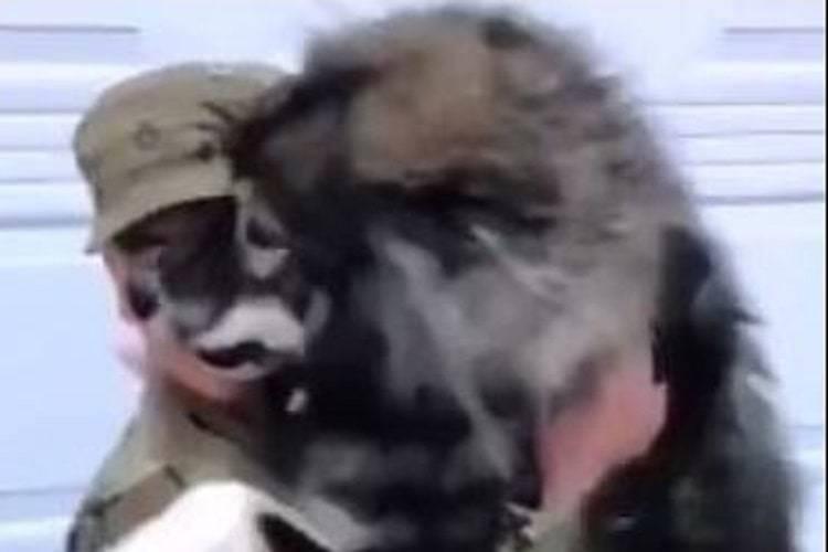 husky rivede proprietario