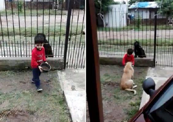 bambino cani