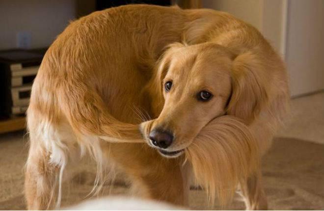 Funzioni coda del cane