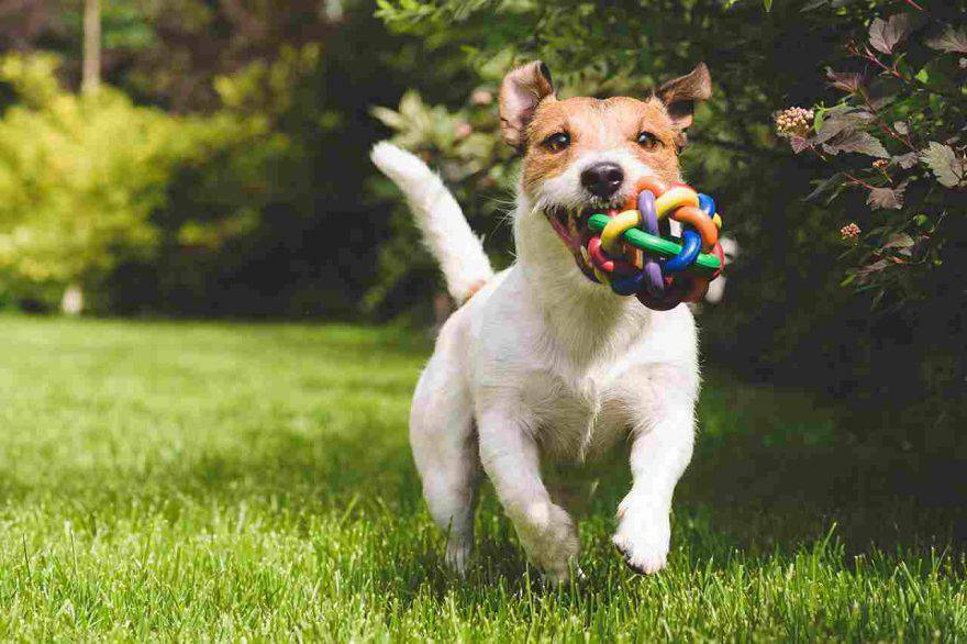 cane in casa o in giardino