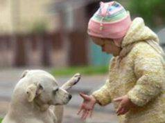 cani migliori delle persone