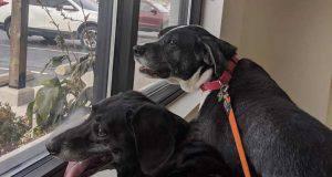 abbandono cani anziani