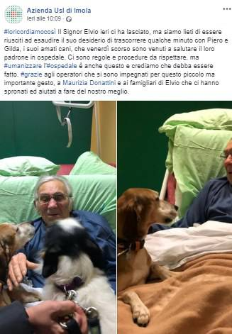 cani in ospedale