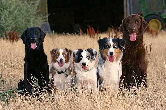 carattere razza cane