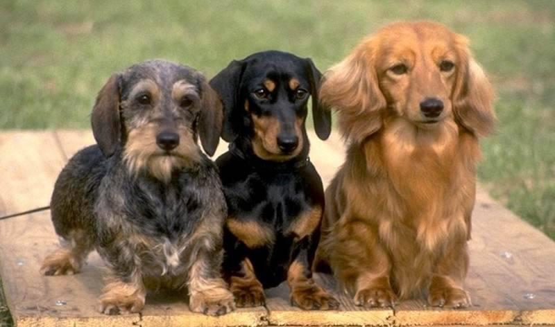 razza carattere cane