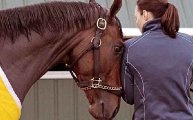 cavallo stress