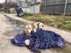 abbandono animali commovente