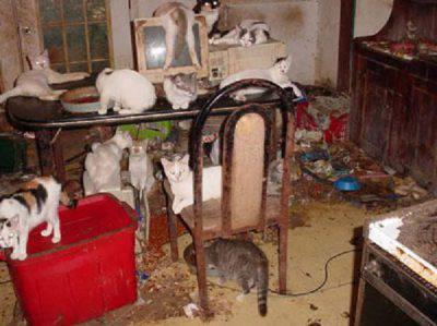 degrado animali
